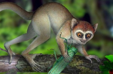 http://edition.cnn.com/2013/06/05/world/asia/oldest-primate-skeleton/index.html?hpt=hp_c5