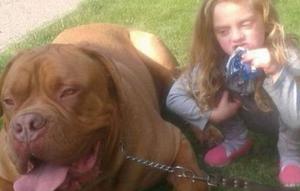 【画像】世界最強の犬マスティフに噛み殺される